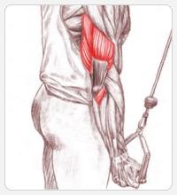 упражнения для рук на трицепс
