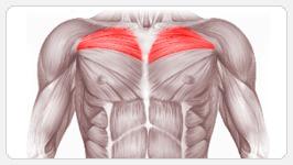 упражнения для груди : верх