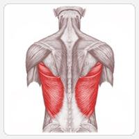 Упражнения для широчайших мышц спины