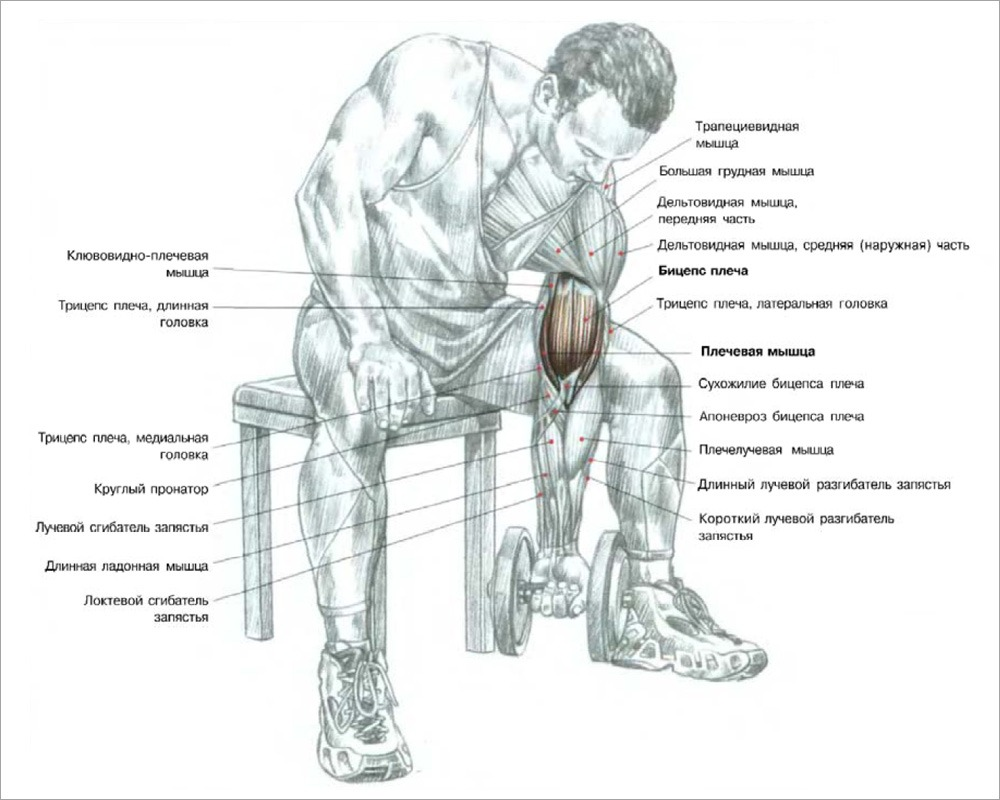 Прокачать мышцы спины в домашних условиях 781