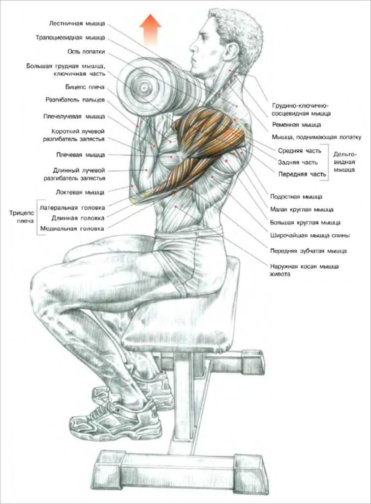 Быстрее накачать грудные мышцы в домашних условиях