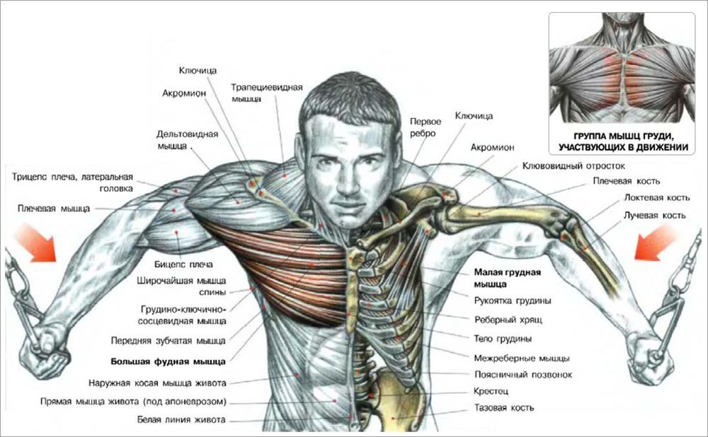 Anatomy labeling exercises