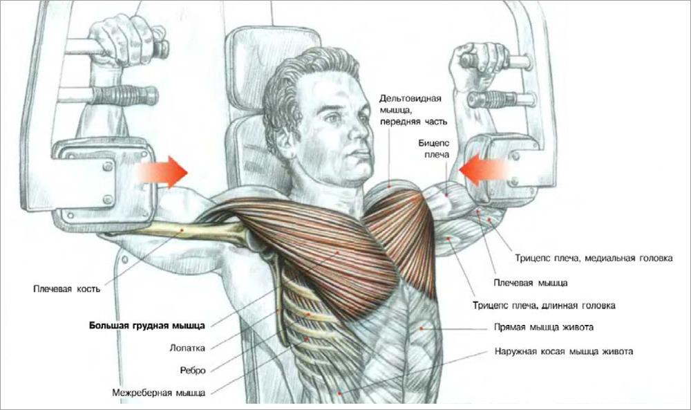 Методика по накачиванию мышц в домашних условиях