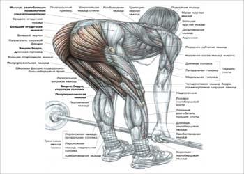 Становая тяга на прямых ногах (мертвая тяга)
