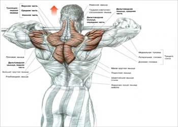 Плечевая передняя протяжка