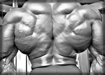 Широчайшие мышцы спины - упражнения, анатомия, особенности тренировки