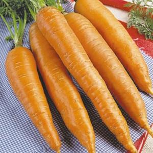 морковь и её свойства