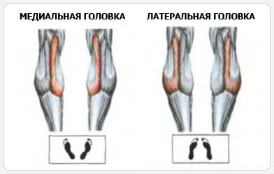 Нагрузка на мышцы в зависимости от постановки стопы