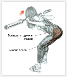 задействованные мышцы при наклонах со штангой на плечах