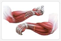 упражнения для рук на предплечье