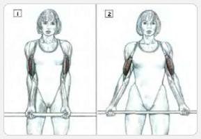 Варианты упражнения сгибание рук со штангой