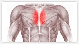 Внутренняя часть груди