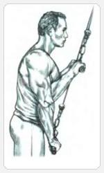Выполнение упражнения разгибание рук с рукояткой верхнего блока хватом сверху