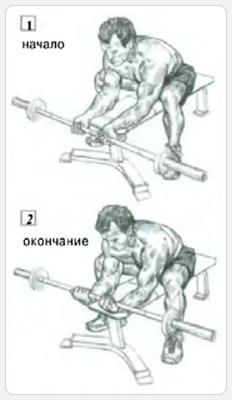 Выполнение упражнения - сгибание запястий со штангой хватом снизу