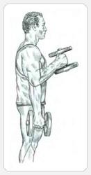 Выполнение упражнения сгибание рук с гантелями