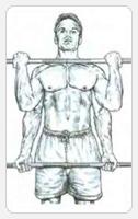 Выполнение упражнения сгибание рук с грифом штанги