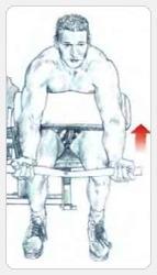 выполнение сгибание рук на скамье LARRY-SCOTT