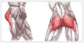 Упражнения для ягодиц: большие ягодичные мышцы