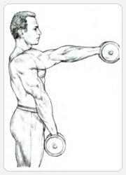 Выполнение упражнения - подъемы гантелей вперед попеременно