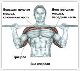 Жим штанги с груди сидя - задействованные мышцы
