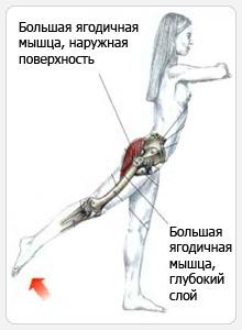 Махи ногой назад с нижнего блока - прорабатываемые мышцы