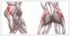 Средние ягодичные мышцы