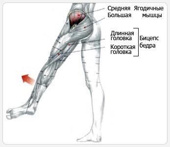 Средняя и малая ягодичные мышцы обеспечивают подъем ноги в сторону
