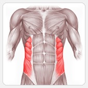 Упражнения для пресса: косые мышцы живота