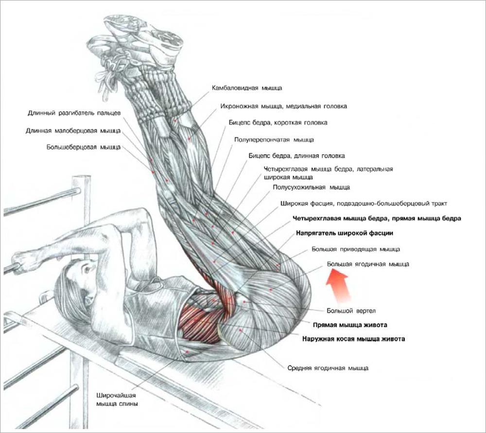 подъемы ног на наклонной скамье