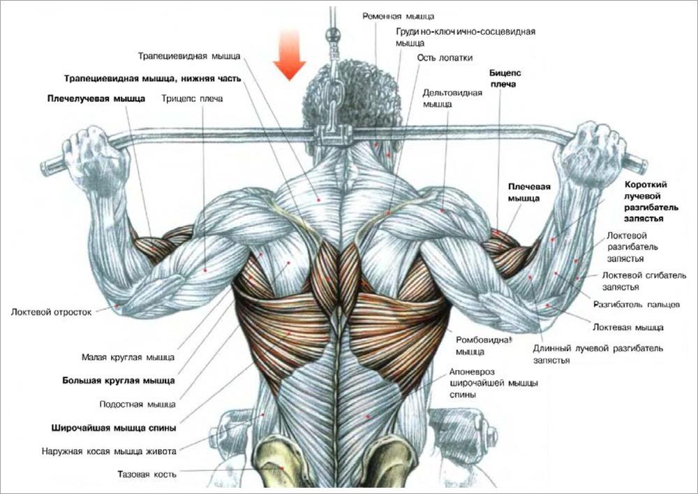 тяга верхнего блока за шею